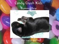 sgs061314-gummyBear